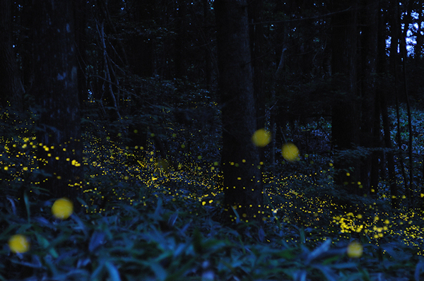 Prairie of the Fireflies